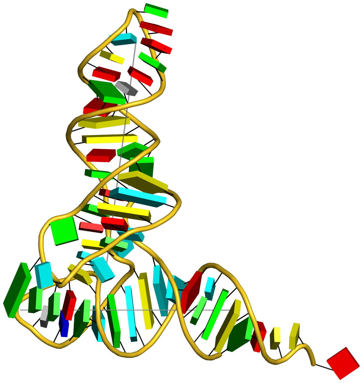 yeast phenylalanine tRNA (1ehz) with WC base-pair blocks