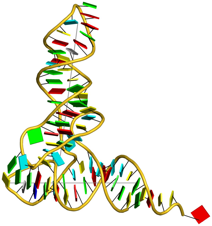 yeast phenylalanine tRNA (1ehz) with base blocks