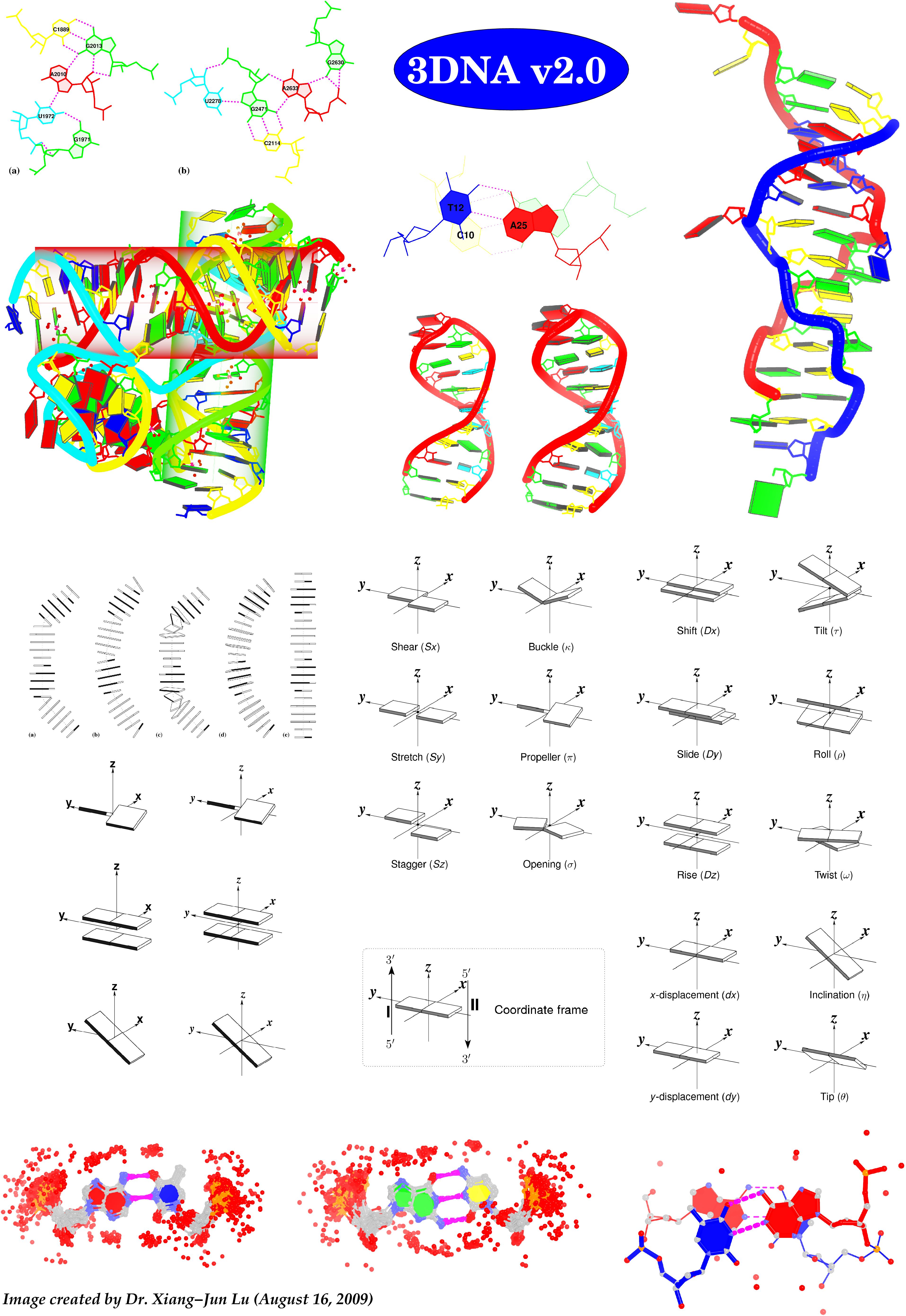 3DNA v2 composite image